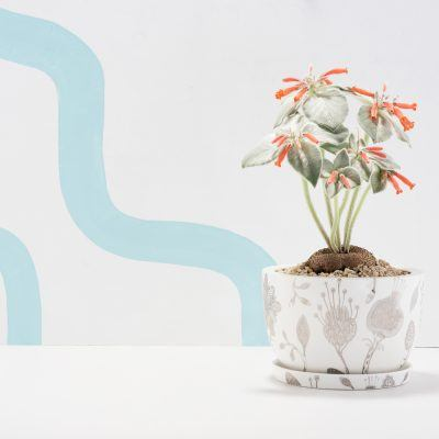 Decorative Plant Pots