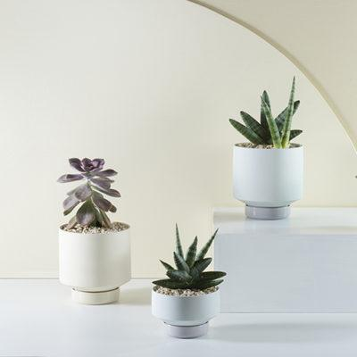 Collectors Gro Pots