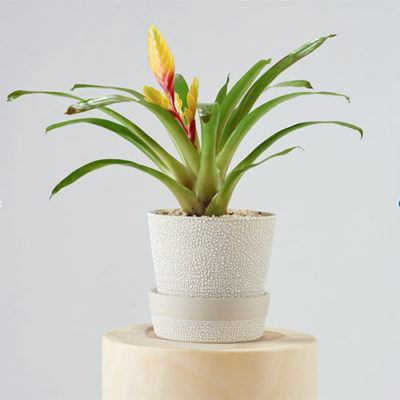 White-Water Bead Plant Pots